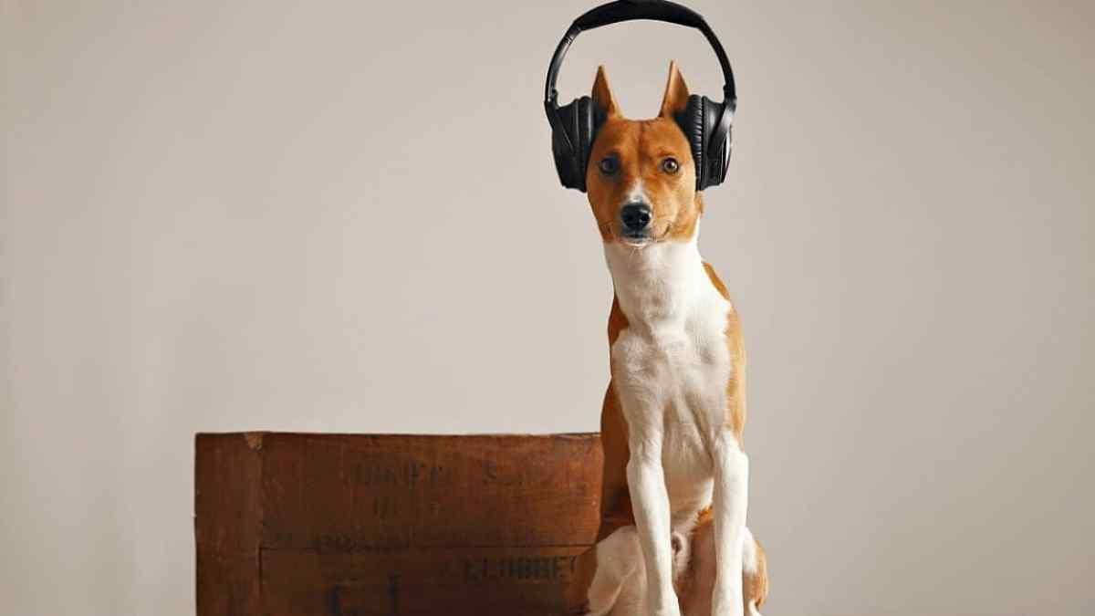 15 Raças de Cachorro que Não Late