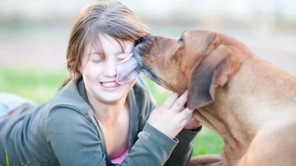 Porque os Cachorros Lambem a Gente?