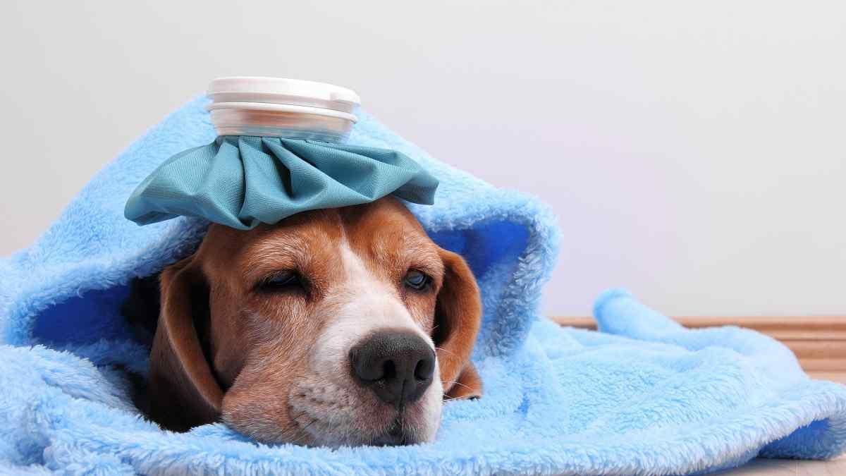 O que fazer quando o cachorro está gripado?