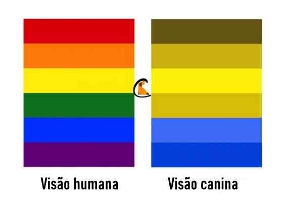 como cachorro enxerga as cores