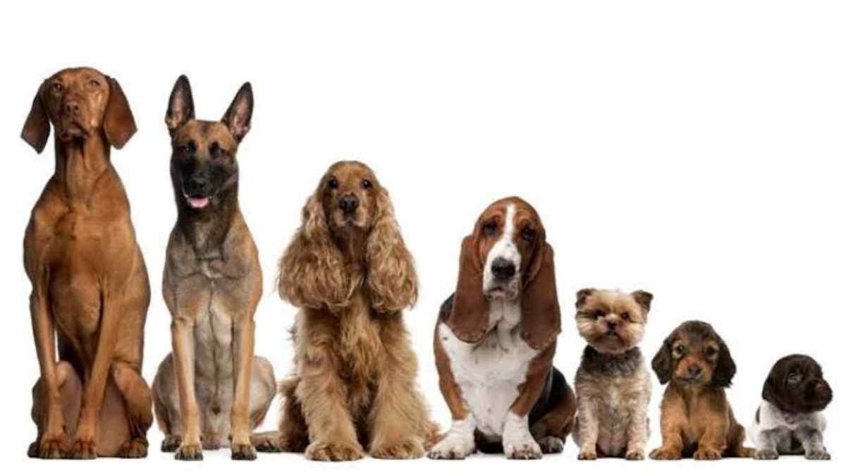 100 Nomes de Cachorro Macho