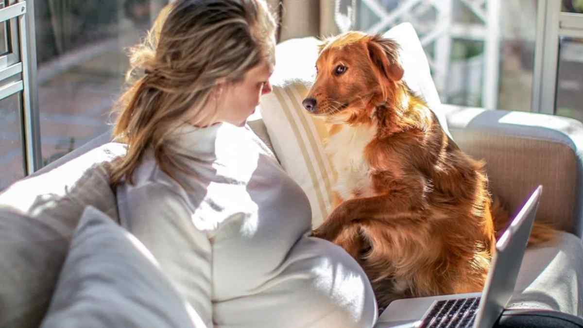 Cachorro Descobre Gravidez da Dona