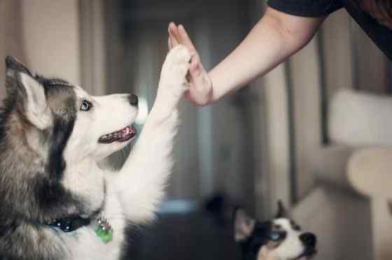 O Cachorro entende o falamos