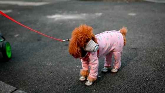 Cachorro pode pegar coronavírus?