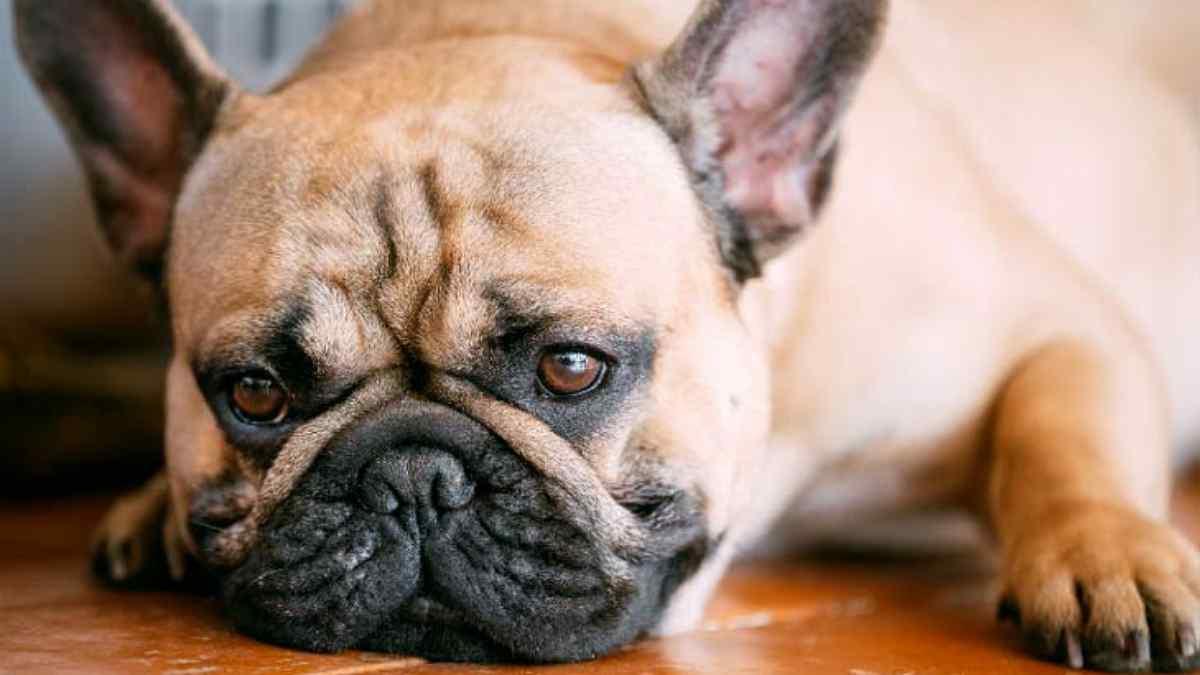 Como saber se o cachorro está com verme?