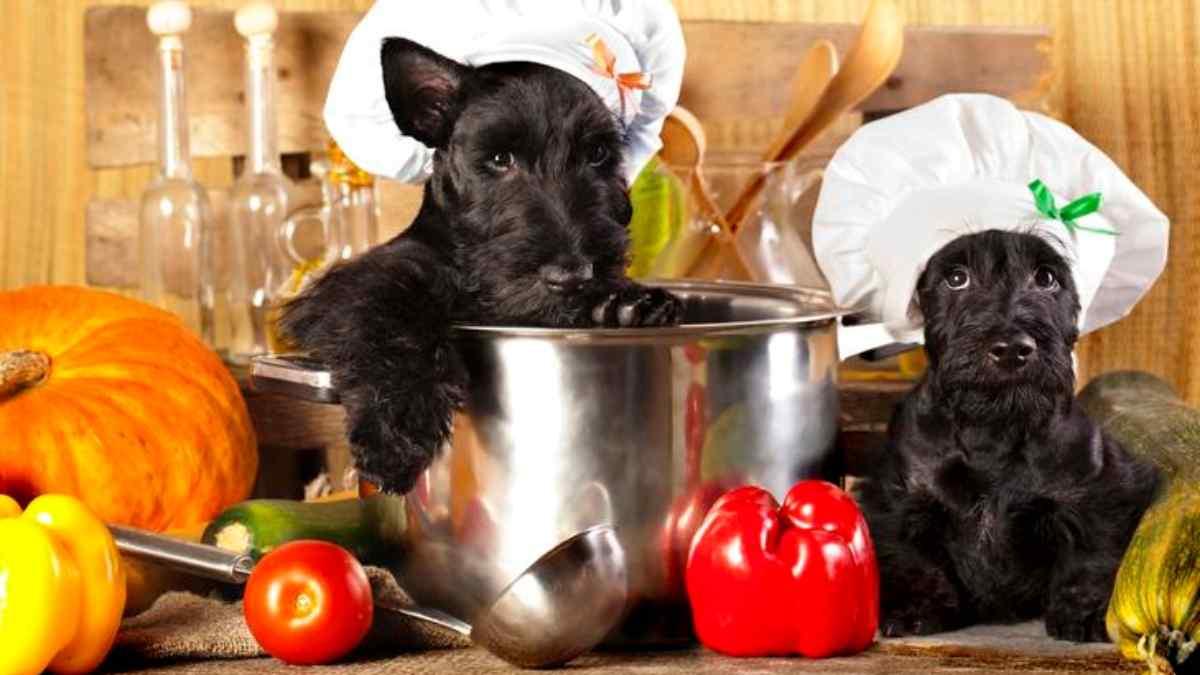 Como fazer uma comida para cachorro natural e saudável