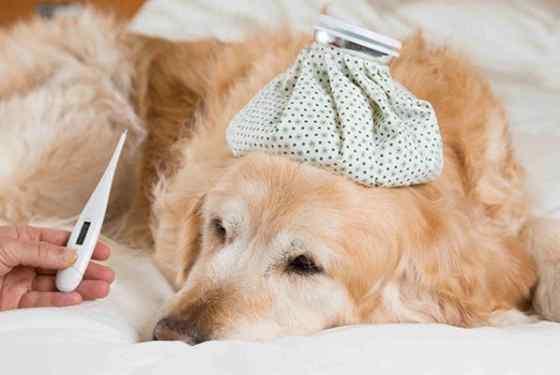 bronquite em cachorro tratamentos