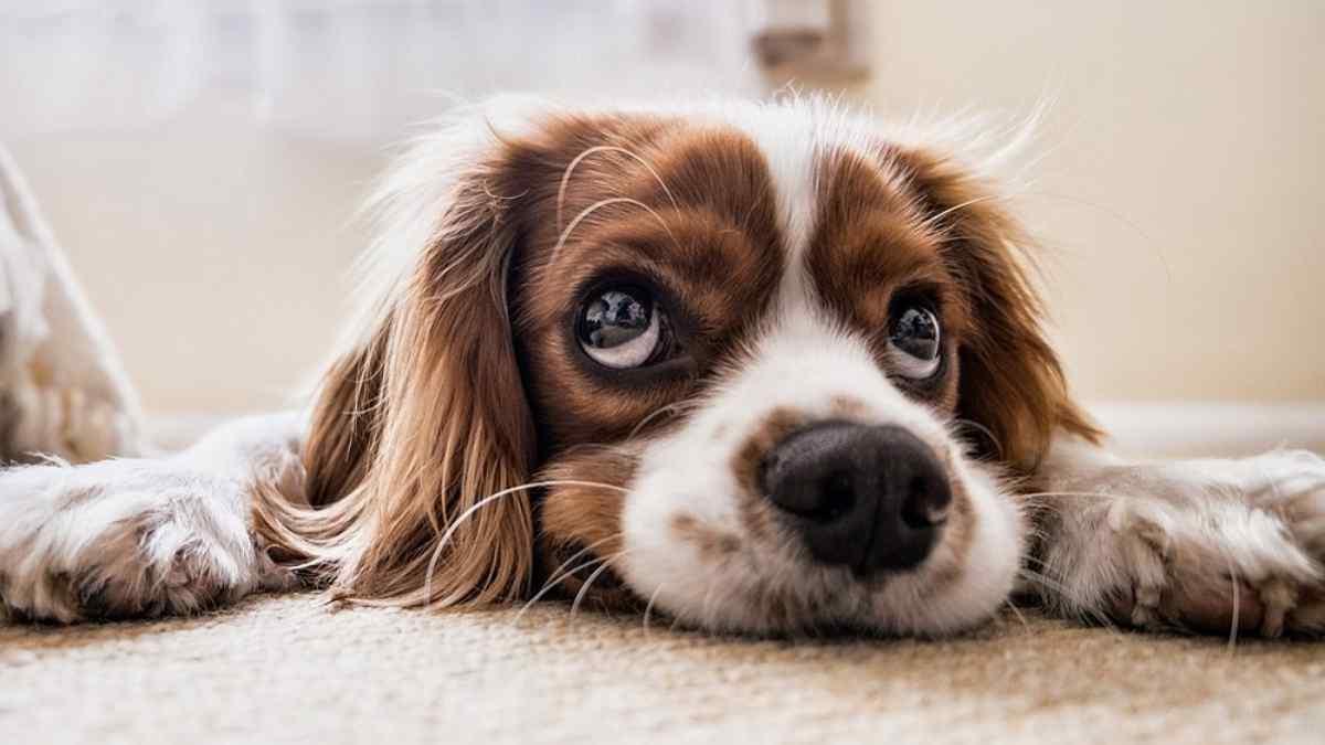 Cachorro pode tomar água de coco ?