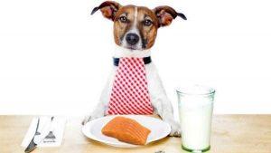 Cachorro Pode Comer Atum