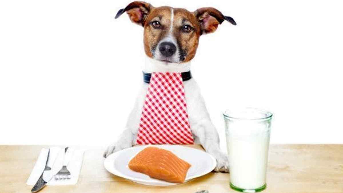 Cachorro Pode Comer Atum?