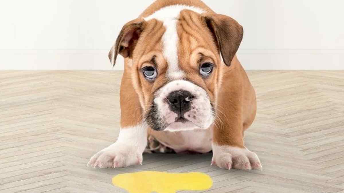 O que pode ser quando o cachorro vomita?