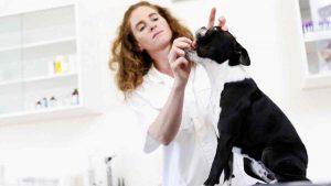 Metronidazol para Cães