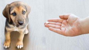 Pode dar Aspirina para Cachorro