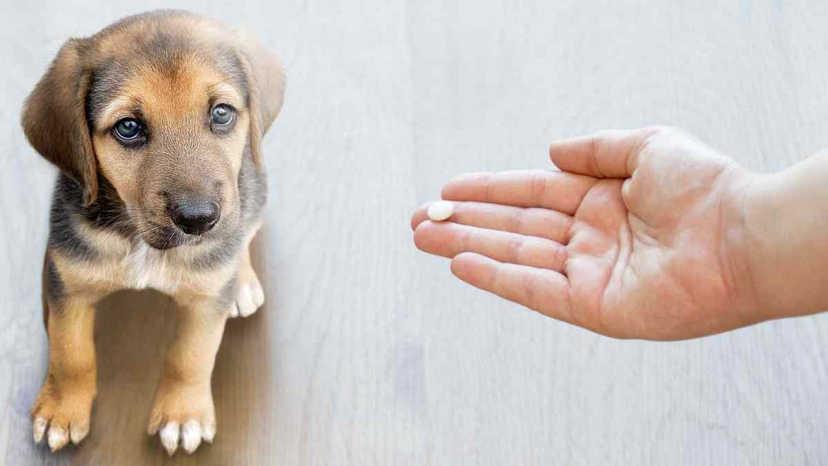 Pode dar Aspirina para Cachorro?