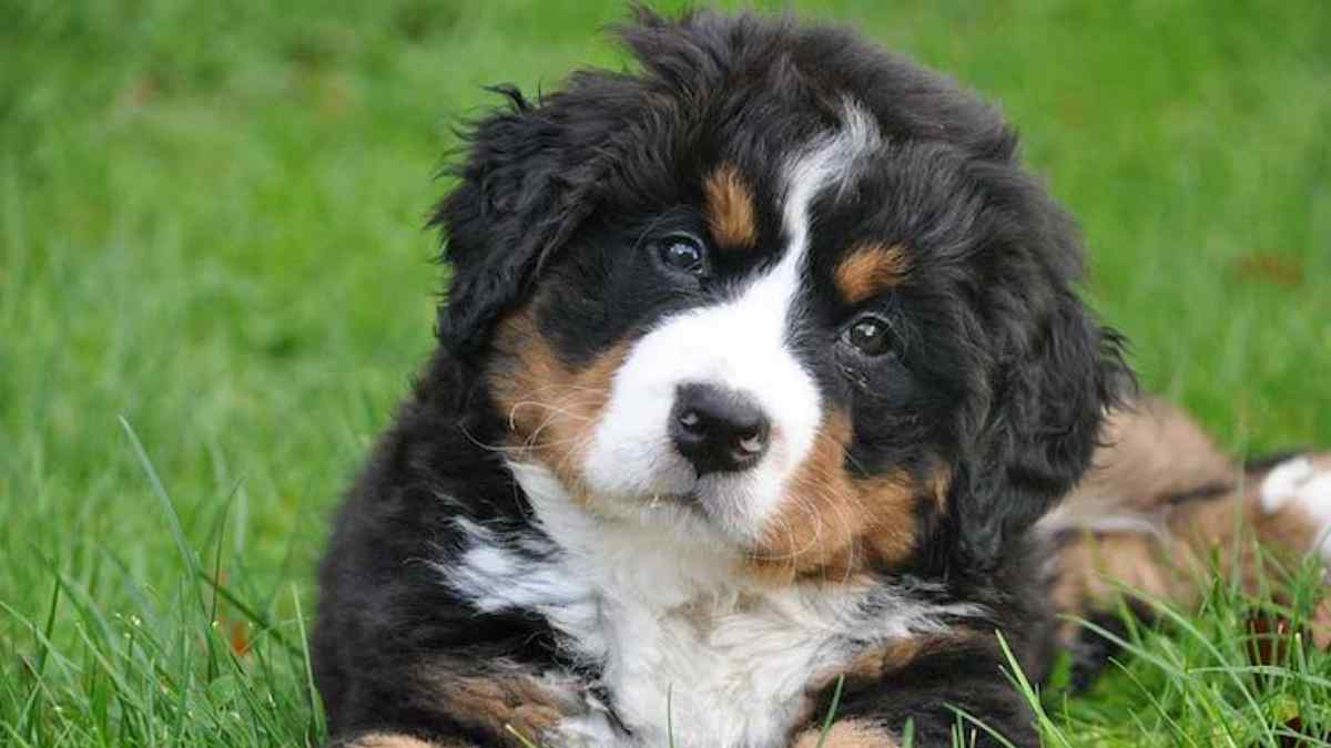 100 Nomes de Cachorro de Rico