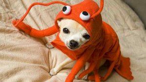 cachorro pode comer camarão