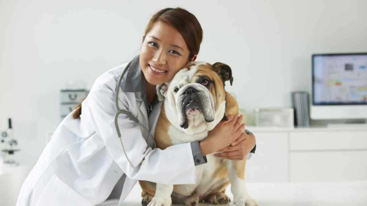 insuficiência renal em cães