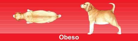 Como Saber se seu Cachorro esta Obeso?