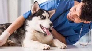 12 Doenças de Cachorro Mais Comuns