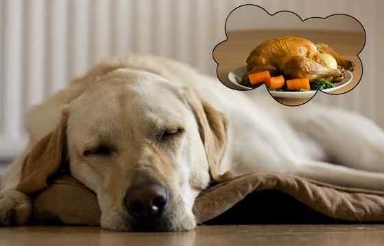 Cachorro Sonha e Tem Pesadelo?